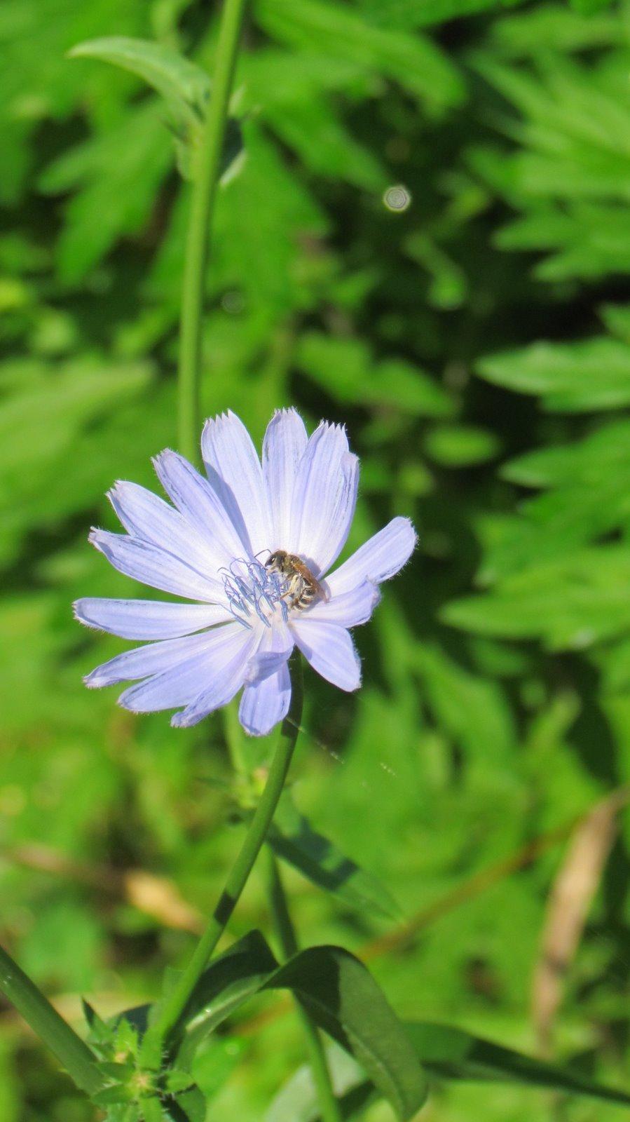 Blue Flowers Make Me Happy - Hixson Tales